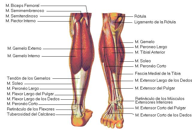 El esquema de la ocupación por la gimnasia médica a la osteocondrosis